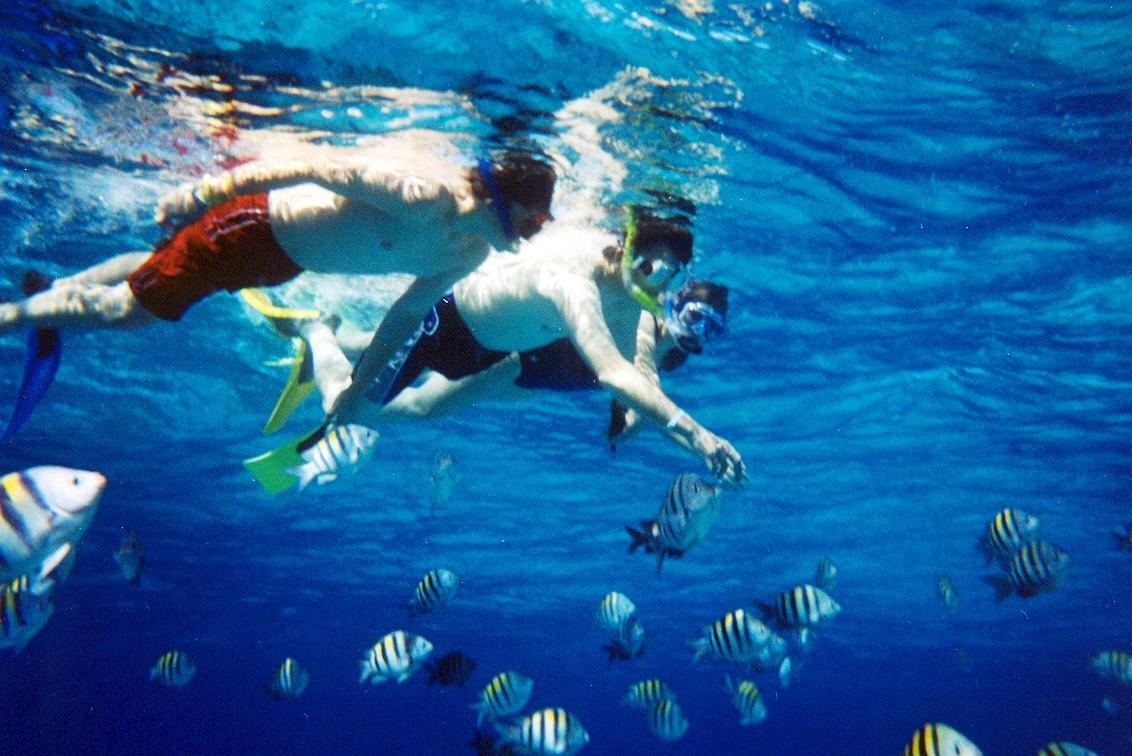 Andaman Snorkeling