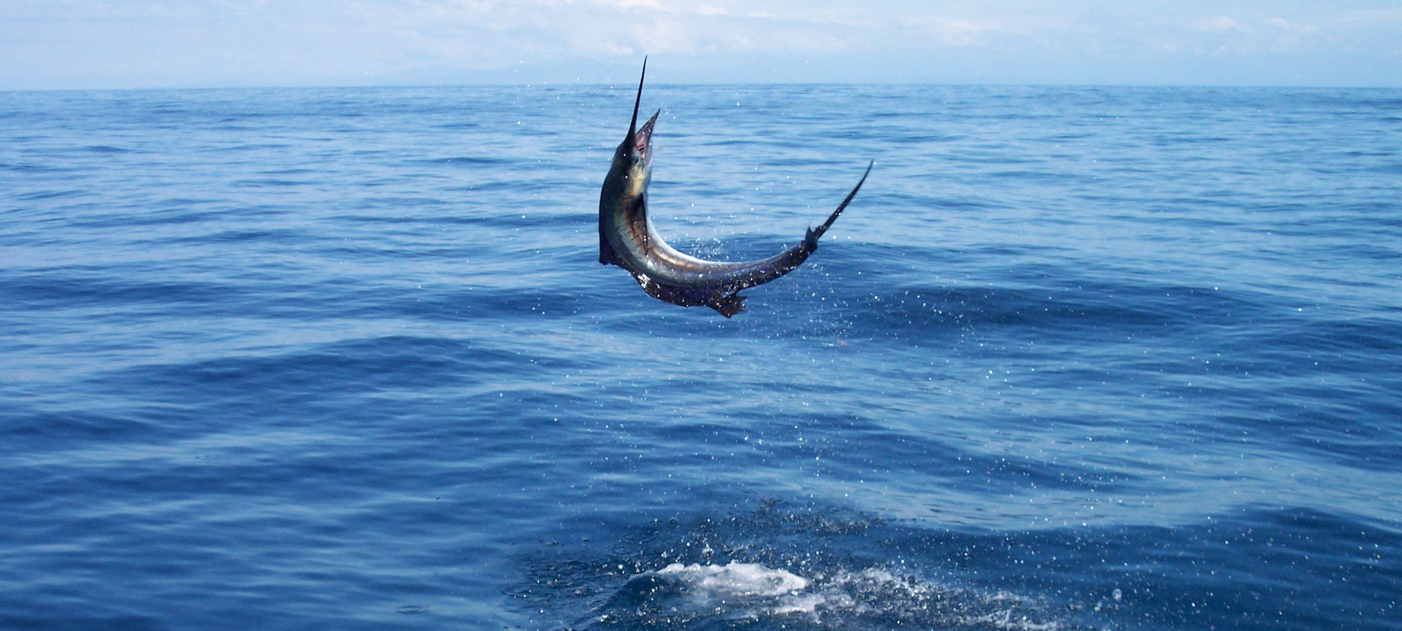 Game fishing in andaman and nicobar island andaman for Deep sea fishing bay area